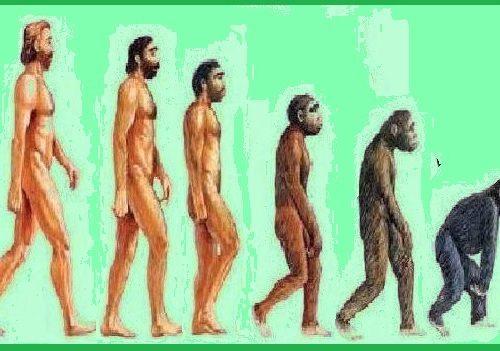 """""""Darwin sbaglia, è la scimmia che discende dall'uomo"""""""