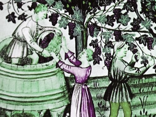 1556: il Comune di Terni vieta l'importazione di mosto e vino