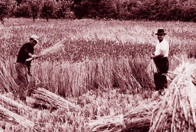 Terni 1923, feriscono il contadino che li scaccia dal campo di grano e i suoi tre figli