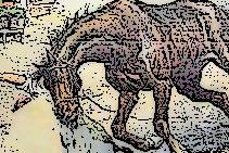 Terni 1908, cavallo imbizzarrito provoca la morte di un vigile del fuoco